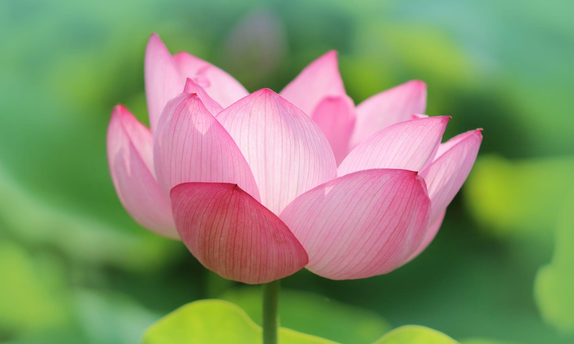 リラクゼーションルーム Lotus